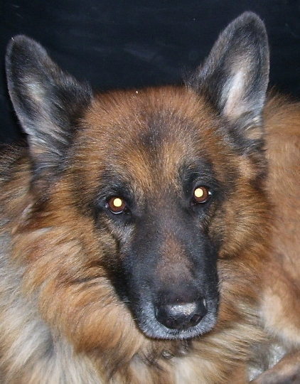 Spencer, My Dog