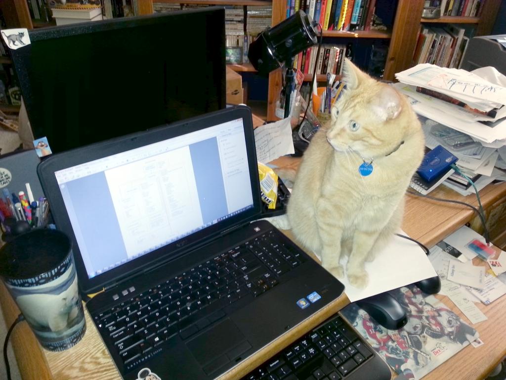 Renee's Editor